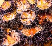 Oursins (ricci di mare) Image libre de droits