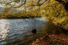 Ourthe river in Belgian Ardennes. In autumn royalty free stock image