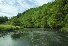 The Ourthe river running wild surrounded by green forest. Hiking in the ardennes of belgium giving away the outstanding nature. In this case the Ourthe runnning royalty free stock photos
