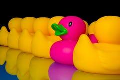 Ouse ser diferente - os patos de borracha no preto fotografia de stock royalty free