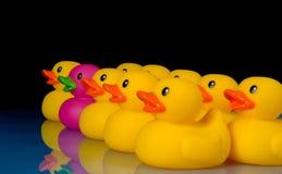 Ouse ser diferente - os patos de borracha no preto Fotografia de Stock