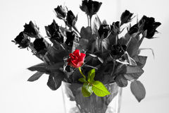 Oustanding. A red rose stands out in a further black & white bouquet of roses Royalty Free Stock Photos