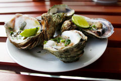 Oysters. Fresh oysters with a lime Royalty Free Stock Photo