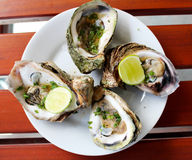 Oysters. Fresh oysters with a lime Royalty Free Stock Images