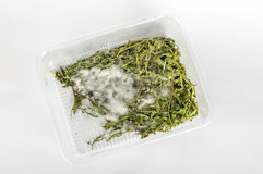 Out dated rucola salad top view. Moldy salads in the plastic box royalty free stock photo