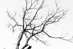 Out drzwiowy drzewny najlepszy spojrzenie zdjęcie stock