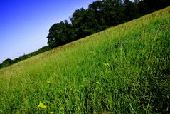 Out in the Fields (Summer Day). Sun is shining, weather is sweet Royalty Free Stock Photos