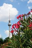 Out of focus berlin television tower in summer Royalty Free Stock Images