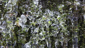 Out of Focus Bokeh of Wall of Moss with Frozen Icicles and Water Dripping Textured Background 1080p stock footage