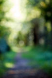 Out of Focus Forest Path Royalty Free Stock Photo