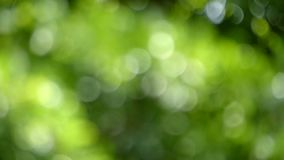 Out of focus slow motion moving of green leaves. Natural blurred green bokeh background stock footage