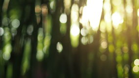 Out of focus sun shine thorugh the blowing on wind bamboo leaves stock footage