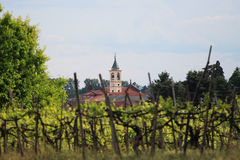 Out of focus vineyard in piedmont Stock Photo