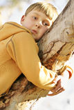 Out on a limb. Boy on a limb of a gum tree. eg; Out on a limb metaphor for taking a risk. eg: save our forests royalty free stock photography