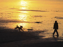Out for a Stroll. Silhouettes of a dog running towards a person on a sandy beach at dusk, with the sunset glistening off the sand Stock Photography