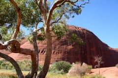 Outback 01 Fotografia Stock Libera da Diritti