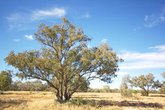 The Outback Royalty Free Stock Photo