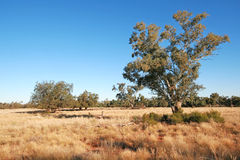 The Outback Royalty Free Stock Photos