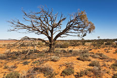 Outback Royalty Free Stock Image