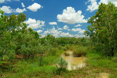 Outback. Unbelieveable green Australian Outback scenery after seldom storm event royalty free stock photos