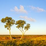 Outback Australia Ghost Gums Royalty Free Stock Photography