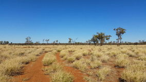 Outback Australia Landscape Red Desert Sand and Dry Arid Grasslands stock video
