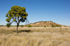 Outback Australia after rain stock photography