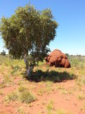 Outback Australia Termite ant hill with tree Royalty Free Stock Image