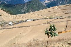 Outback countryside in China. Foreground have yellow field and background had mountain,small hut Stock Photo
