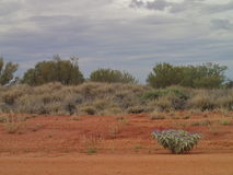 Outback. With flower Stock Photography