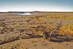 Outback l'Australia Immagine Stock