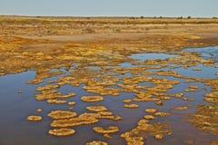 Outback l'Australia Immagine Stock Libera da Diritti