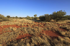 Outback Landscape - Australia Royalty Free Stock Images