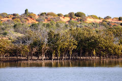 Outback Ocean Mangroves, near Redbanks at the top of Spencer Gul. F, Port Augusta, South Australia Royalty Free Stock Image