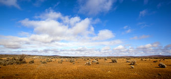 outback panorama Arkivbild