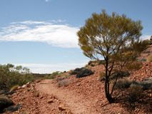 Outback Path. Path following a ridge after passing by an acacia tree stock images