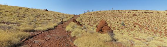 Outback road, australia. Beautiful outback road in the middle of  australia Royalty Free Stock Photos