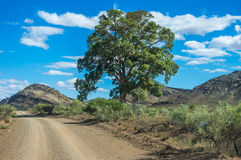 Outback Roads stock image