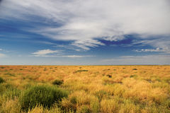 Outback Scenery. Near Bourke, New South Wales, Australia royalty free stock photo