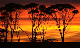 Outback sunrise. Sunrise sets the sky ablaze stock images