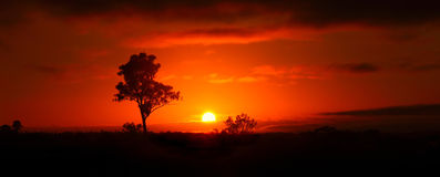 Outback Sunrise. Saturated sunrise in rural Queensland, Australia royalty free stock image