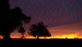 Outback Sunrise Royalty Free Stock Image