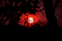 Outback sunset. Sunset see trought trees in Australia stock photo