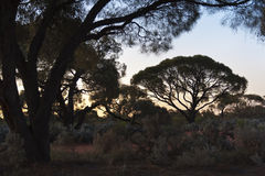 Outback Sunset Stock Images