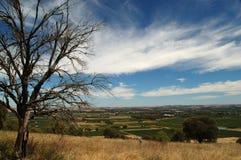 Outback Tanunda. A scenic shot of the surrounding area near Tanunda, South Australia Royalty Free Stock Photos