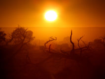 outback tree Arkivbild