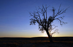 Outback Tree Stock Photography
