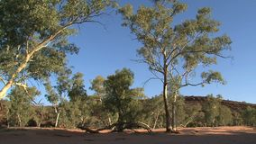 Outback trees,Alice Springs, Australia, Outback, Australia, alice, springs, tree, trees, nature stock video footage