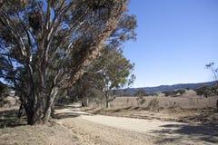 Outback väg Royaltyfri Fotografi