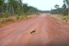 outback väg Royaltyfri Foto